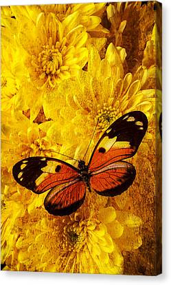 Butterfly Abstract Canvas Print by Garry Gay