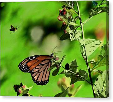 Butterfly And Bee Canvas Print