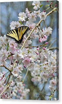 Butterfly And Blooms Canvas Print by Kenny Francis