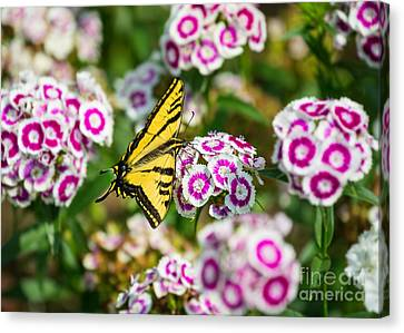 Butterfly And Blooms - Spring Flowers And Tiger Swallowtail Butterfly. Canvas Print by Jamie Pham