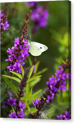 Butterfly And Bouquet Canvas Print