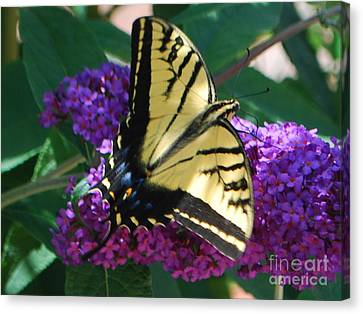 Canvas Print featuring the photograph Butterfly And Bush by William Wyckoff