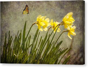 Butterfly And Daffodils Canvas Print