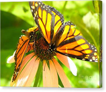 Butterfly And Friend Canvas Print