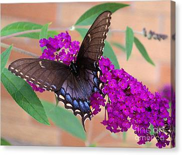 Butterfly And Friend Canvas Print by Luther Fine Art