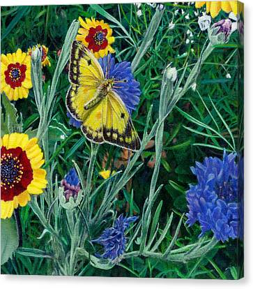Butterfly And Wildflowers Spring Floral Garden Floral In Green And Yellow - Square Format Image Canvas Print by Walt Curlee