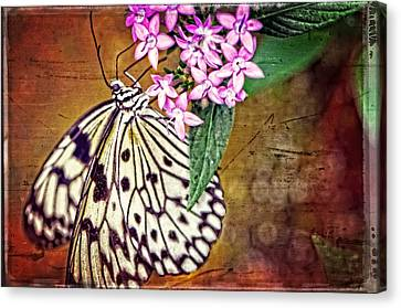 Butterfly Art - Hanging On - By Sharon Cummings Canvas Print by Sharon Cummings