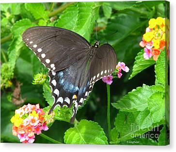Butterfly Ballot Canvas Print by Greg Patzer