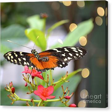 Canvas Print featuring the photograph Butterfly Beauty by Carla Carson