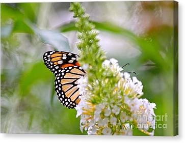 Canvas Print featuring the photograph Butterfly Behind Bush by Jay Nodianos