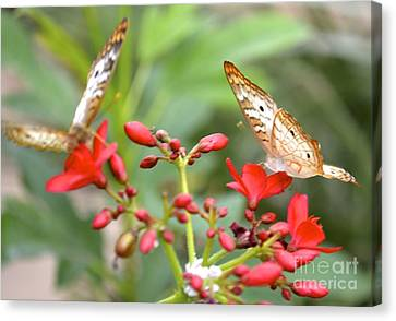 Canvas Print featuring the photograph Butterfly Besties by Carla Carson
