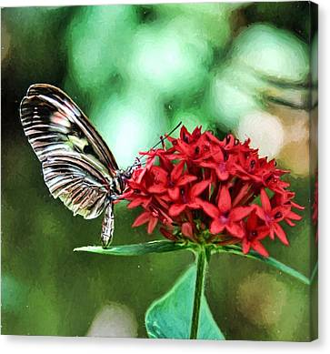 Butterfly Canvas Print by Bill Howard