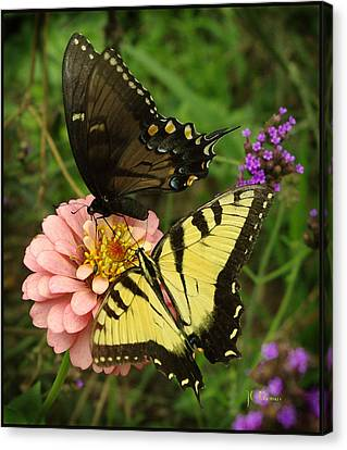 Swallowtaill Bliss Canvas Print by James C Thomas