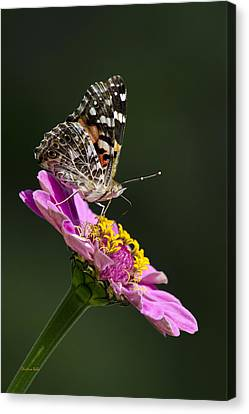 Butterfly Blossom Canvas Print by Christina Rollo