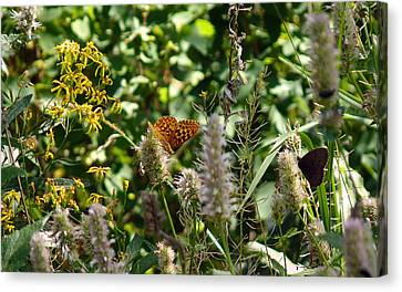 Butterfly Buffet Canvas Print