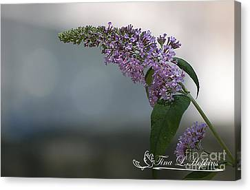 Butterfly Bush 20120706_165a Canvas Print