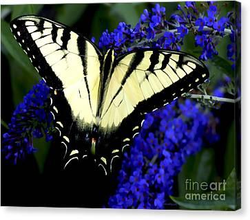 Butterfly Bush Canvas Print by Sami Martin