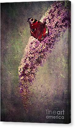 Butterfly Bush Canvas Print by Svetlana Sewell