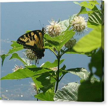 Butterfly By The Water Canvas Print by Stephen Melcher