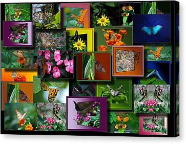 Butterfly Collage Rectangle Canvas Print by Thomas Woolworth