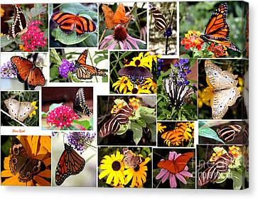Canvas Print featuring the photograph Butterfly Collage by Steven Spak