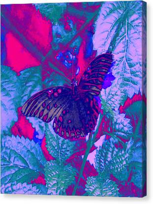 Butterfly  Canvas Print by David Mckinney