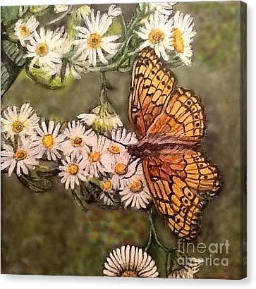 Butterfly Delight Canvas Print by Kimberlee Baxter