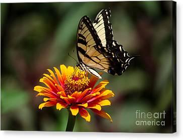 Butterfly Delight Canvas Print by Nancy Edwards