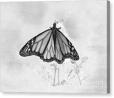 Butterfly Canvas Print by Denise Deiloh