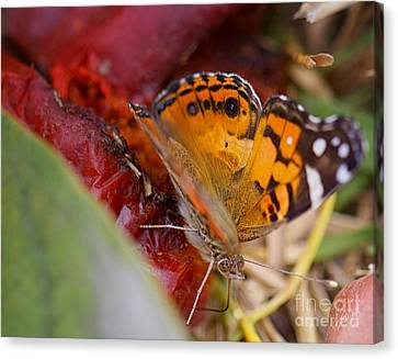 Canvas Print featuring the photograph Butterfly by Erika Weber