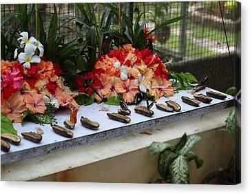 Butterfly Farm - Phuket Thailand - 011348 Canvas Print
