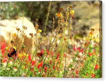 Canvas Print featuring the photograph Butterfly Feeding by David  Norman