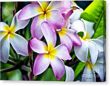 Canvas Print featuring the photograph Butterfly Flowers by Thomas Woolworth