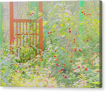 Butterfly Garded II Canvas Print by Shirley Moravec