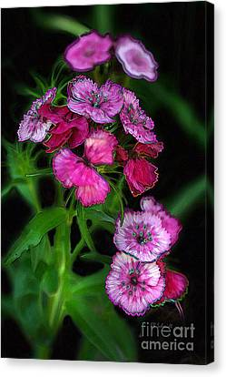 Canvas Print featuring the digital art Butterfly Garden 02 - Carnations by E B Schmidt
