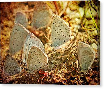 Canvas Print featuring the photograph Butterfly Gathering by Peggy Collins