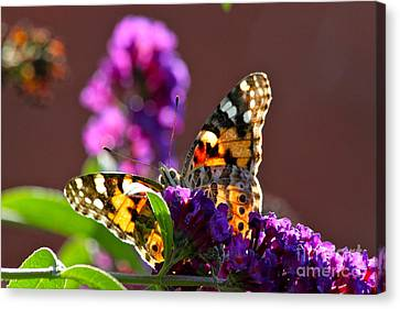 Canvas Print featuring the photograph Butterfly Hiding by Jay Nodianos