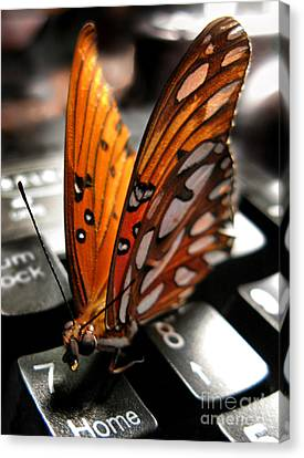 Canvas Print featuring the photograph Butterfly Home At 7 by Jennie Breeze