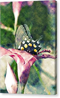 Butterfly In Flower Canvas Print