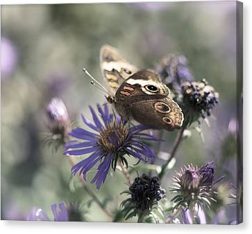 Butterfly In Pastel - Buckeye On Asters Canvas Print