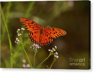Canvas Print featuring the photograph Butterfly by J Cheyenne Howell