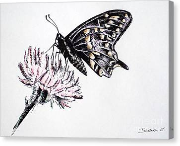 Butterfly Canvas Print by Katharina Filus