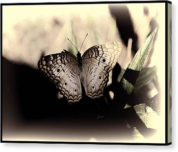 Butterfly Kisses Canvas Print by Oscar Alvarez Jr