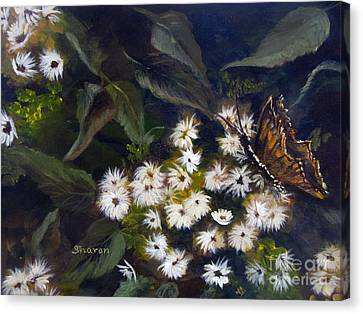 Butterfly Kisses Canvas Print by Sharon Burger