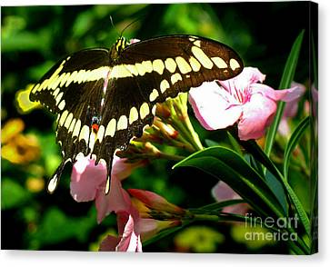 Canvas Print featuring the photograph Butterfly by Kristine Merc