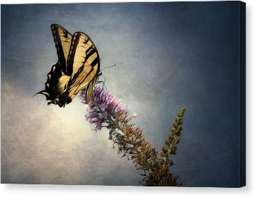 Butterfly Landing Canvas Print by Jeff Burton