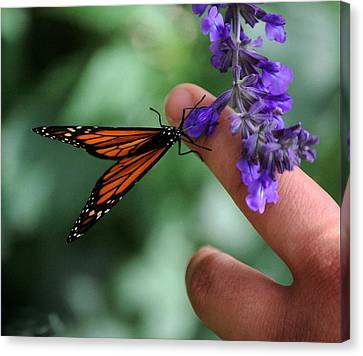 Canvas Print featuring the photograph Butterfly by Leticia Latocki