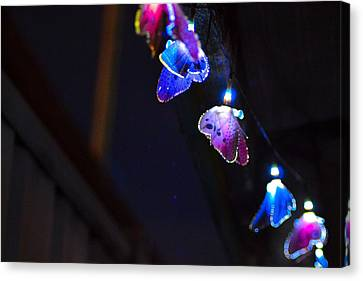 Canvas Print featuring the photograph Butterfly Lights Hanging At Night  by Naomi Burgess