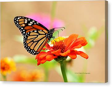 Canvas Print featuring the digital art Butterfly Lunch by Lorna Rogers Photography
