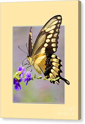 Butterfly Canvas Print by Mariarosa Rockefeller